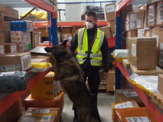 Interpol closes illegal online pharmacies