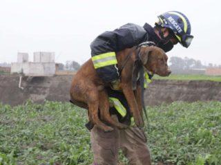 FOTOS: Rescatan a dos perros atrapados en el fondo del gigantesco socavón en México