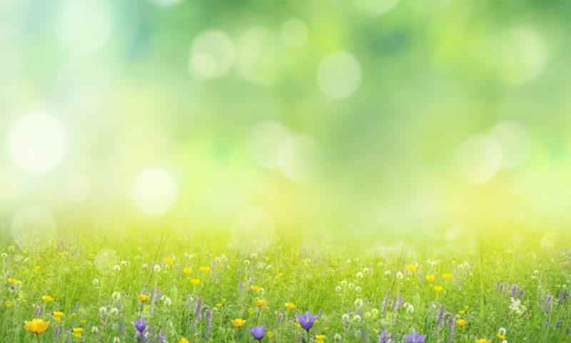 Java framework: test native with Native Spring 0.10