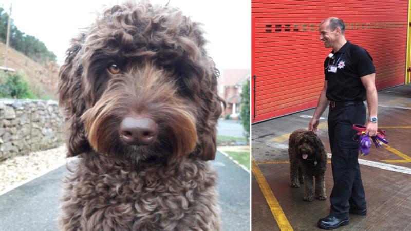 Un perro de los bomberos hace reír a una mujer que planeaba suicidarse y ayuda a rescatarla