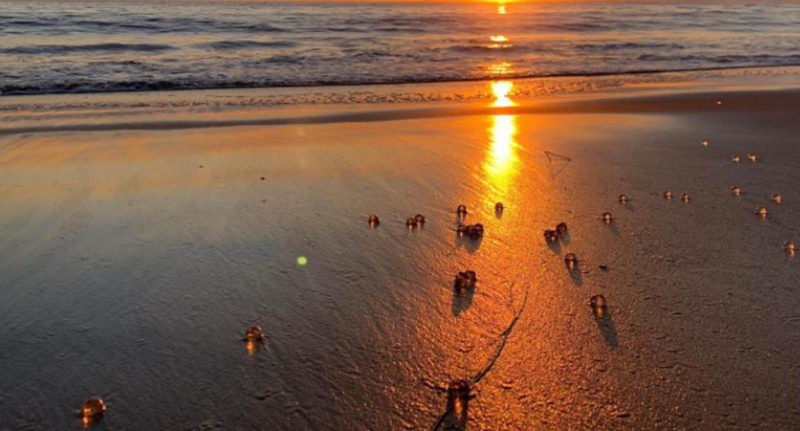 The strange spheres that appeared on various California beaches