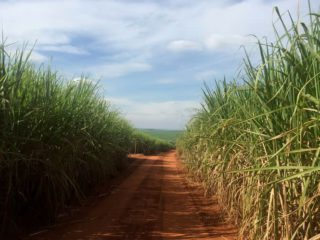 Brazil's sugar production rises to record at the end of May, ethanol production advances 9%