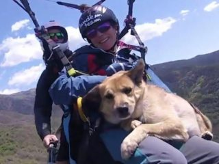 Chico, the brave dog that practices paragliding next to his beloved owners