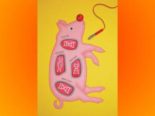 CRISPR: How genetic scissors make pigs immune