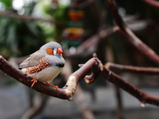 How researchers reconstruct a bird's song from brain activity