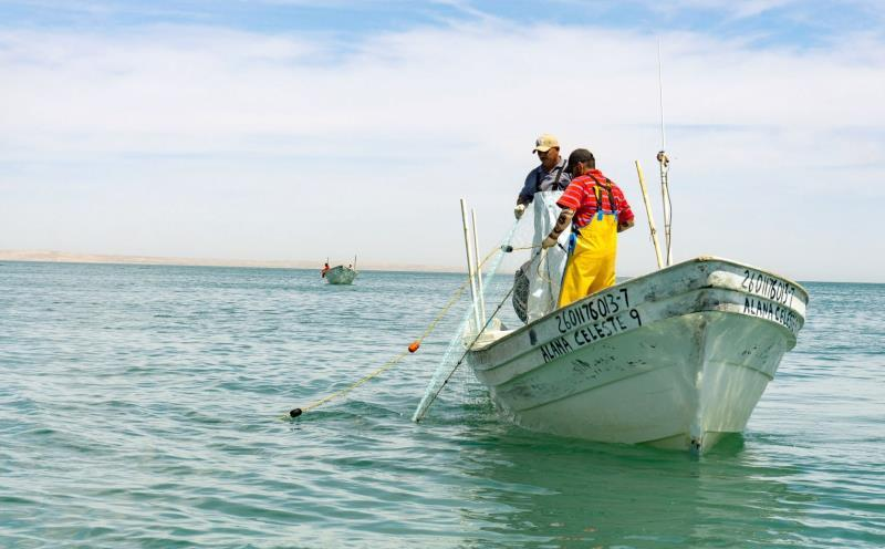 Mexico begins the fishing season after the end of the closure