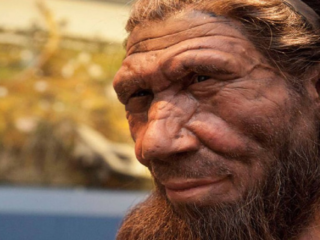 Scientists discover what Siberian Neanderthals ate