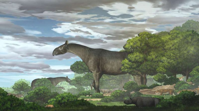 They found fossils of a new species of giant rhinoceros: it was taller than a giraffe