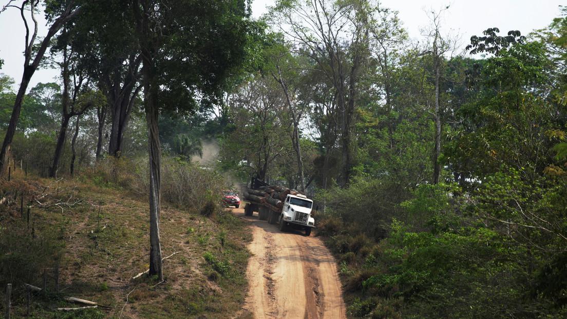 Narcotráfico, desplazamiento forzado y violencias: las huellas silenciadas de la deforestación de la selva en Suramérica