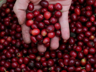 Inusuales heladas golpean el corazón cafetero de Brasil y dañan los cultivos