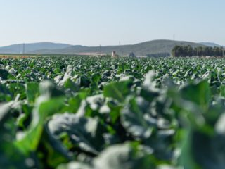 Murcia region: benchmark in cutting-edge, efficient and innovative water management