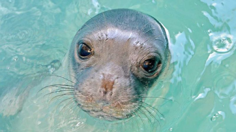 They search for an amateur fisherman who killed the most beloved seal on an island in Greece