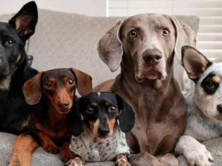 World Dog Day: Why is it celebrated on July 21?