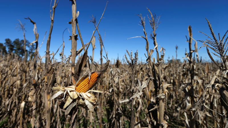 Food prices on the rise due to the pandemic and natural disasters