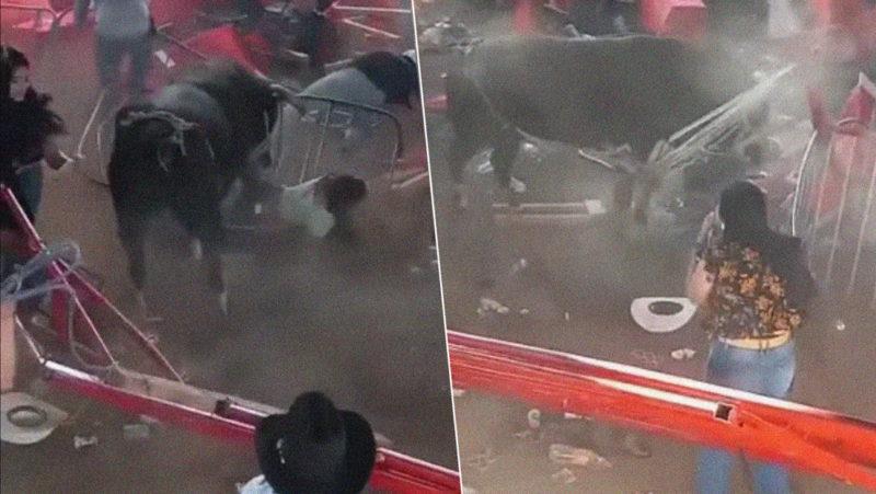 Un rodeo clandestino se sale del control en México: un toro embiste a la multitud y la fiesta termina con una balacera (VIDEOS)