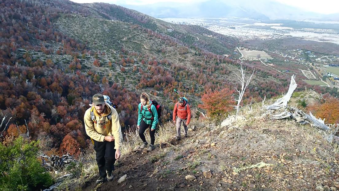 Resurgir de las cenizas: la ardua (y silenciosa) tarea de reforestar los bosques quemados del sur argentino