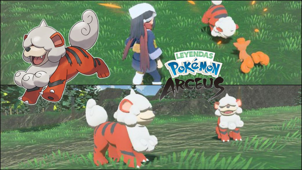 Pokémon Arceus Legends: Hisui and Kanto's Growlithe, how are they different?