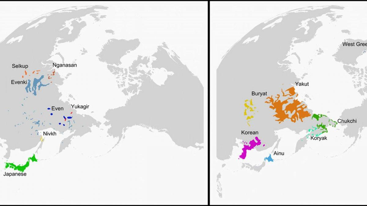 In Darwin's footsteps: grammar correlates with genetics
