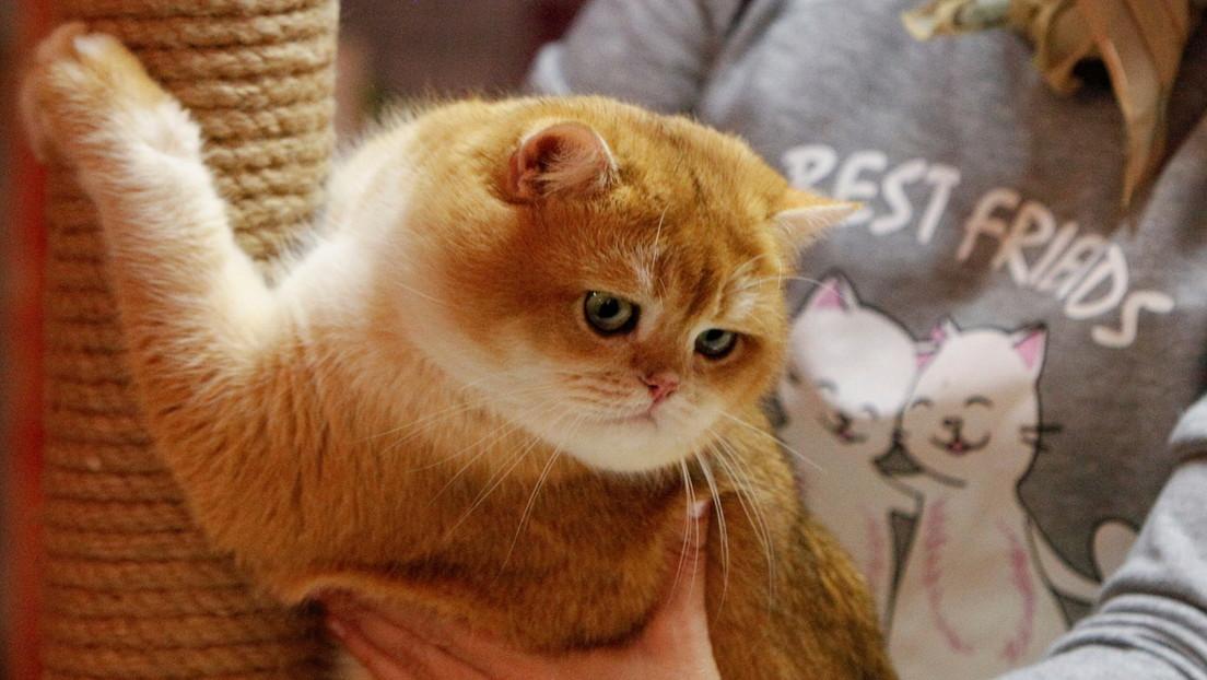 Identifican 7 rasgos que definen el carácter de los gatos