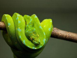 Estudio: Las serpientes actuales evolucionaron a partir de unos pocos sobrevivientes del asteroide que extinguió a los dinosaurios