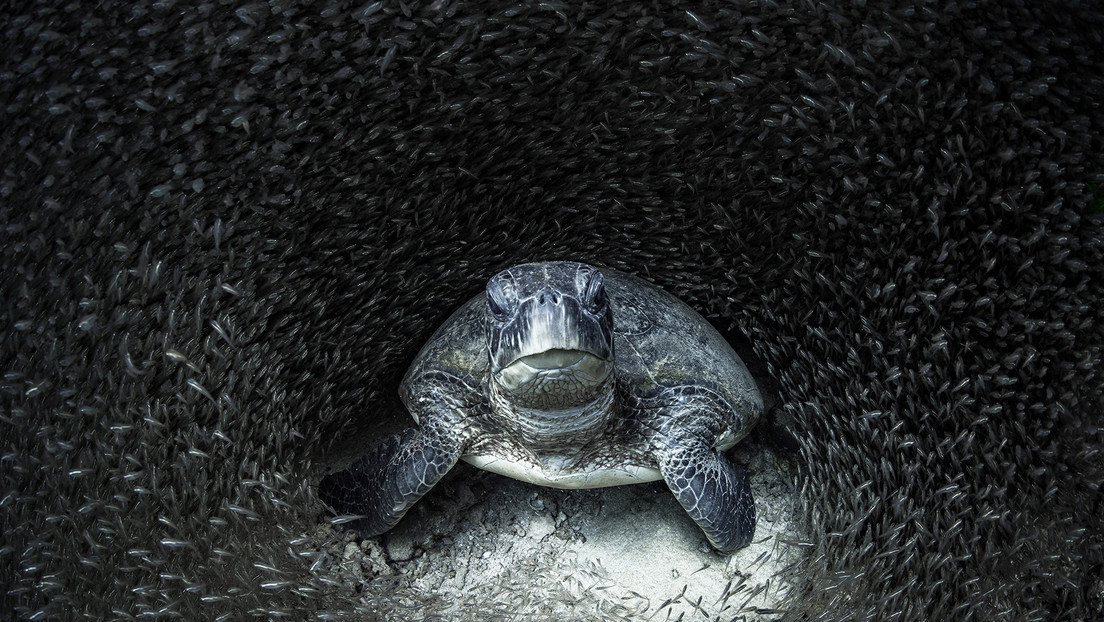 'The turtle took the cat to the water': these are the impressive winning images of the Ocean Photography Award 2021
