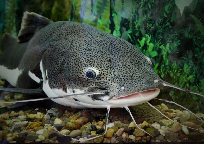"""A man tried to help a catfish, but ended up being the victim of an unusual """"robbery"""""""