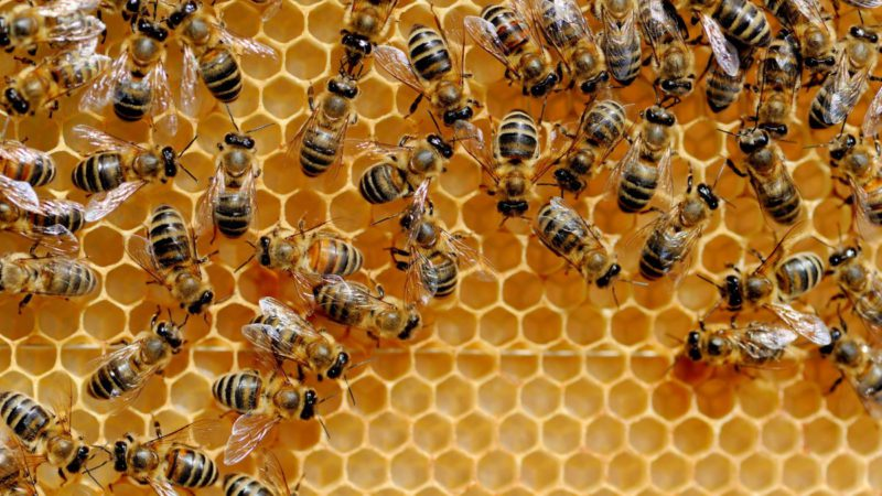 Internet of Things: HiveMQ 4.7 lets machines read along