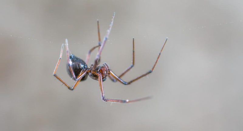 The homemade trick to keep spiders away from our home