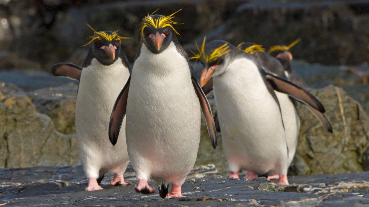 Linux From Scratch 11.0: Abschied vom Split-User-System