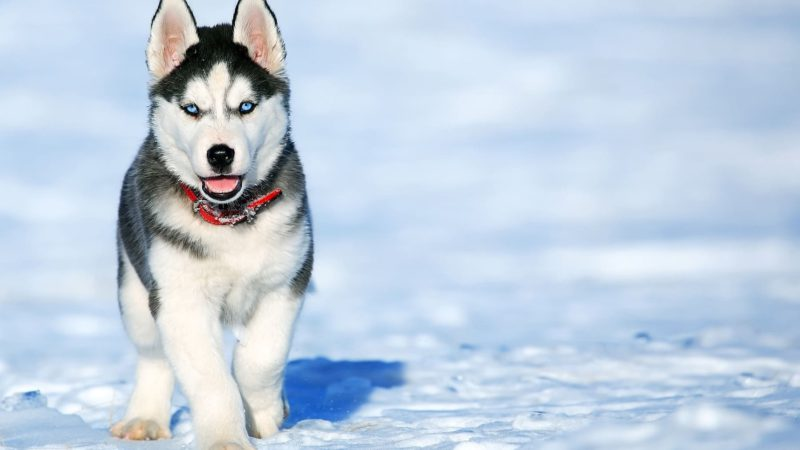 The 5 oldest dog breeds in the world