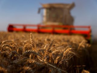 Wheat in the US recovers thanks to cuts in world supply and a weakening of the dollar