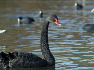 """Why unexpected events are called """"black swans"""" and how science is working to predict them"""