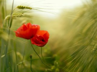 """c't photography competition """"Flower Power"""": These are the winners"""