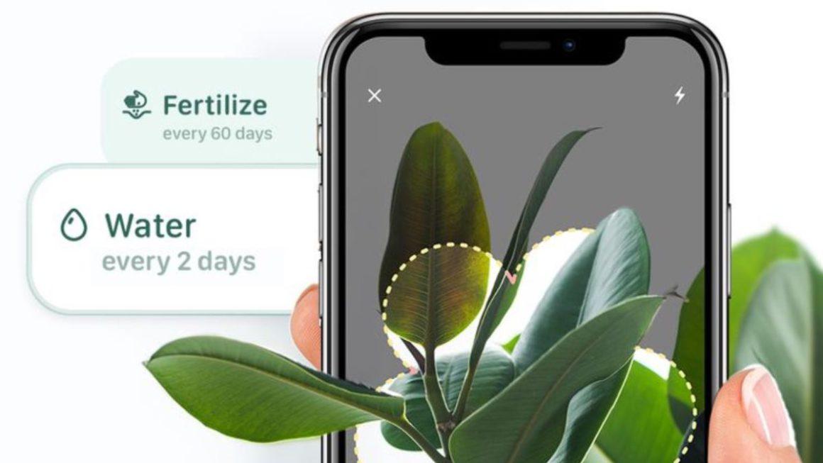 Blossom, una app para identificar plantas y cuidarlas