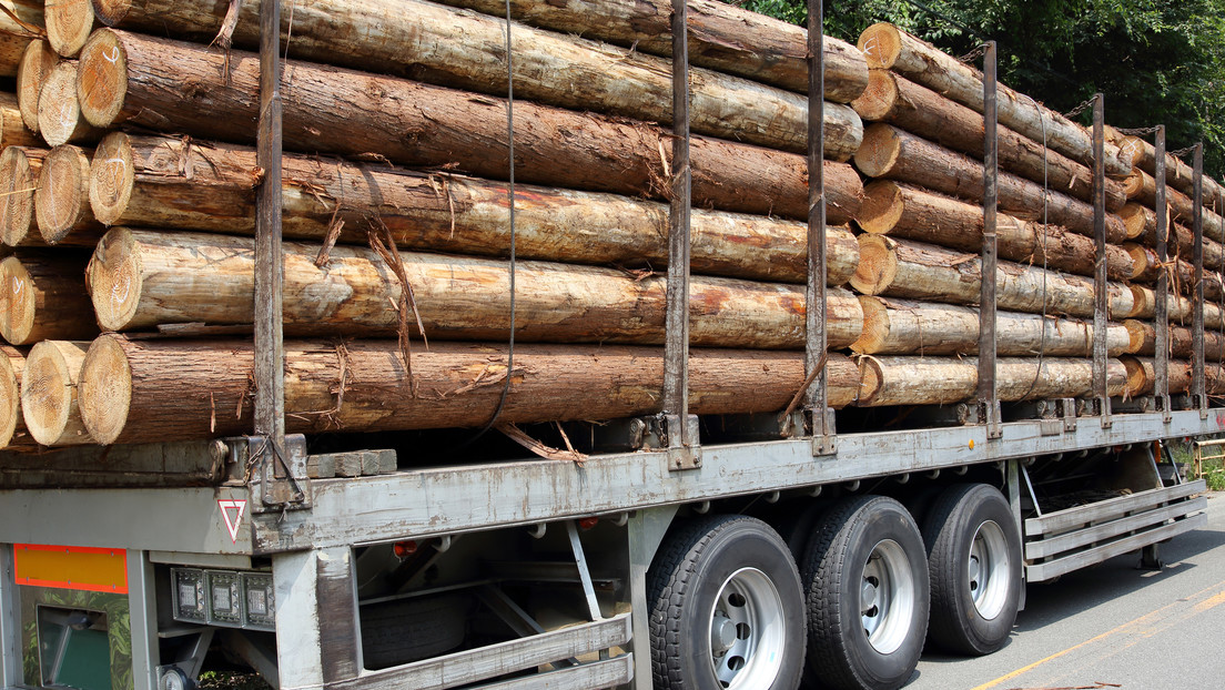 Mexico loses thousands of hectares of forests every year due to clandestine logging