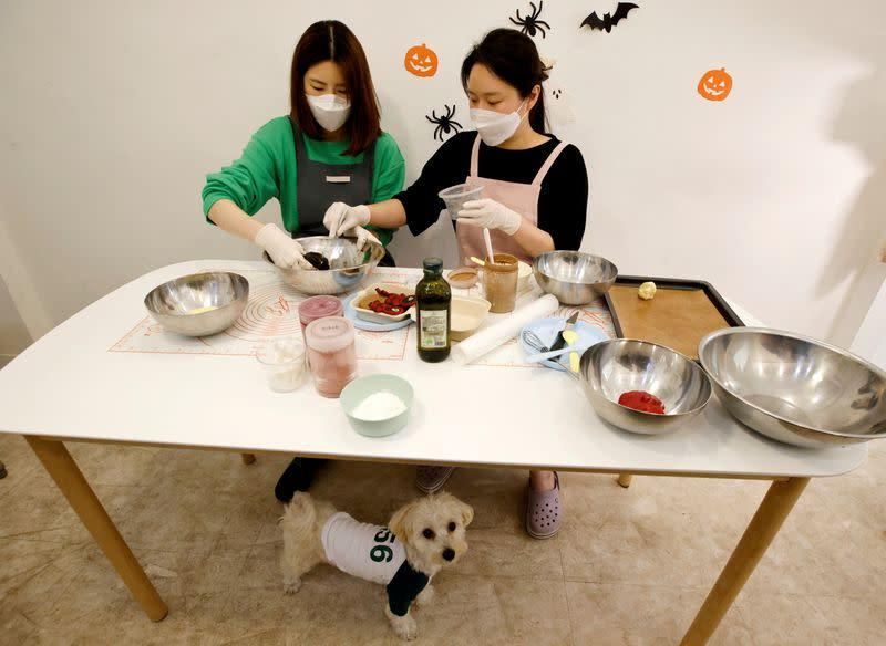 """La propietaria de una tienda para mascotas prepara galletas para perros inspiradas en la serie de Netflix """"El juego del calamar"""", en Seúl"""