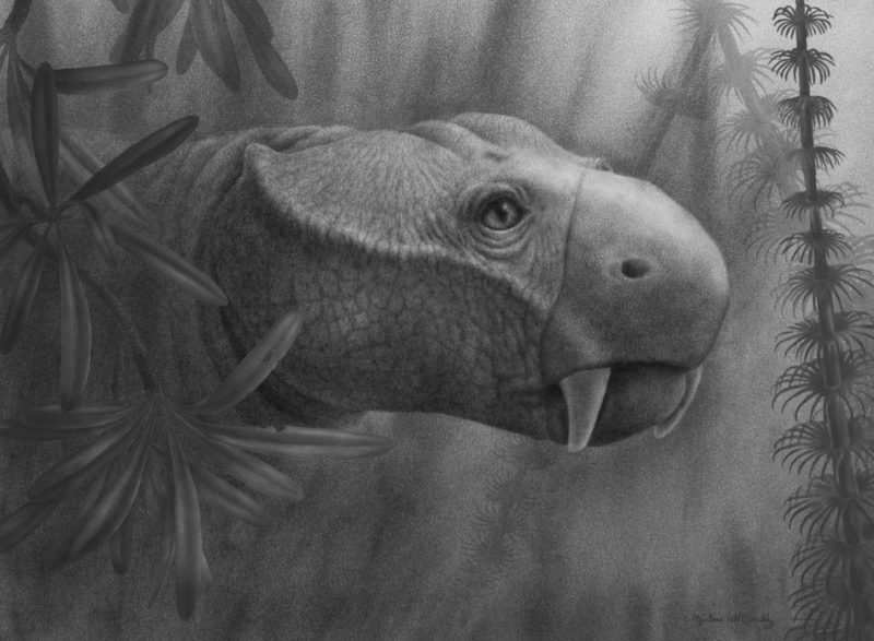 They study the evolution of tusks from dicynodonts to mammals