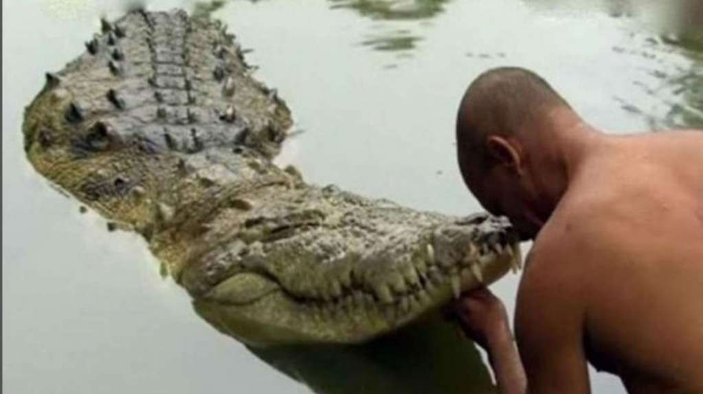 This is Babiya, the 70-year-old vegetarian crocodile who lives in a temple
