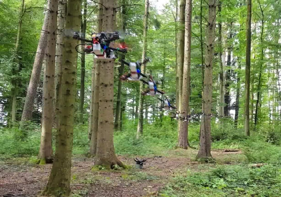 Without a ticket in advance: drones race through the forest